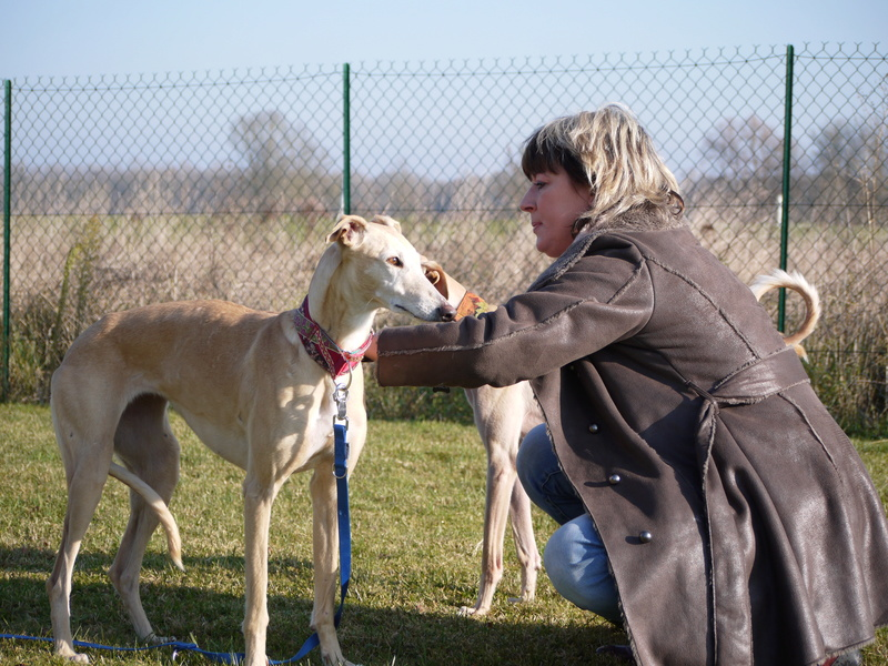 SABRINA galga blanche et crème, 3 ans 1/2  Scooby France  - Page 2 P1320117