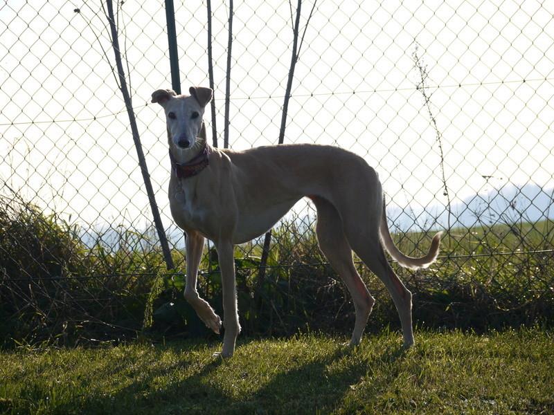SABRINA galga blanche et crème, 3 ans 1/2  Scooby France  - Page 2 P1320119