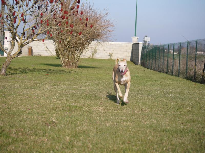 SABRINA galga blanche et crème, 3 ans 1/2  Scooby France  - Page 2 P1320120