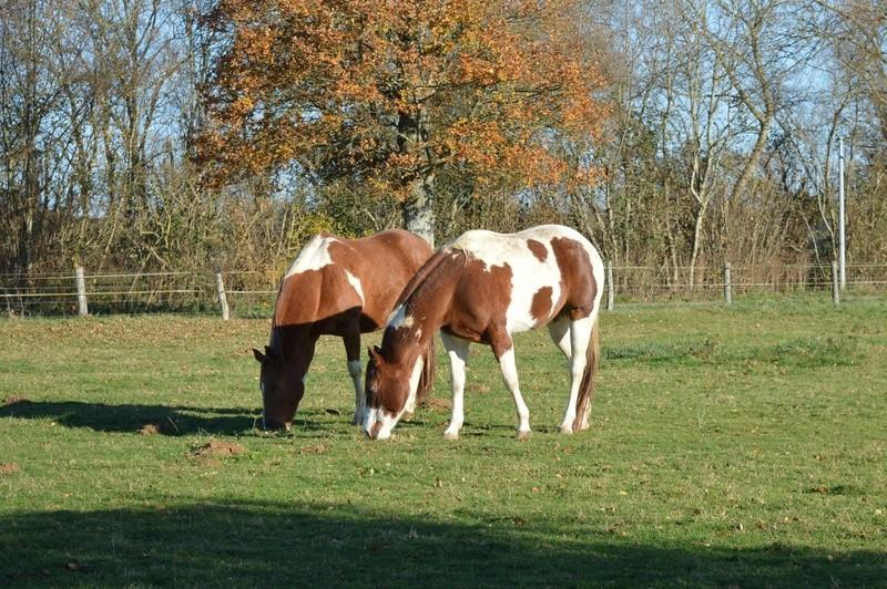 Le cheval et l'automne : venez voter 15304310