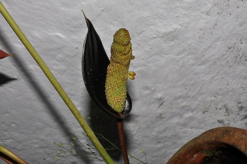 visite aux serres de chez Amazone 2012-011