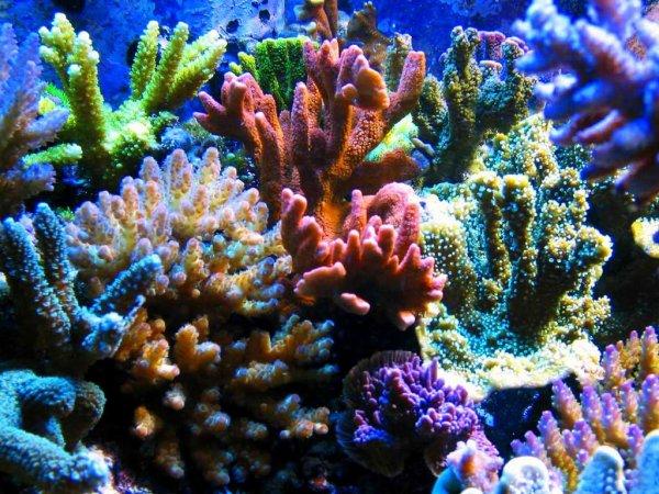 Projet aquarium de Fitzzo 28627810