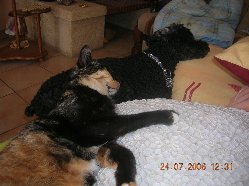 Mes petits Vacanciers adorés :) Calyps17