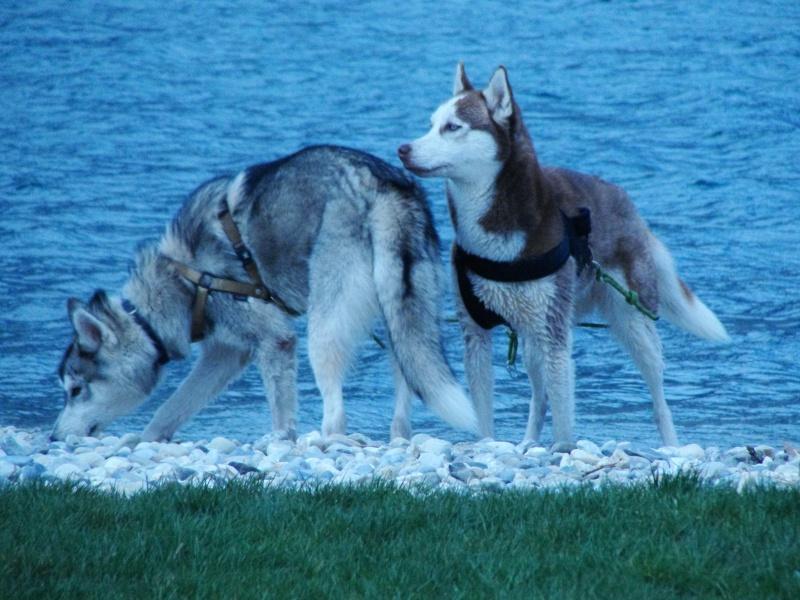 Loki et Gaïa Dsc02911