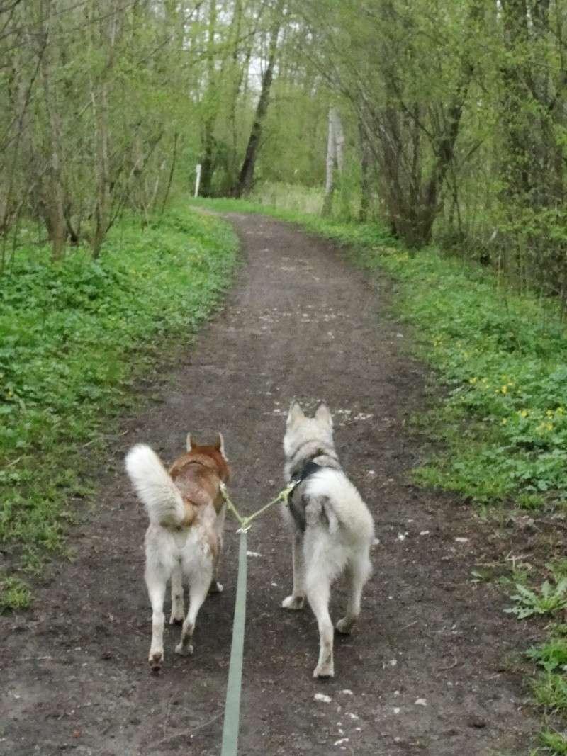 Loki et Gaïa Dsc02912