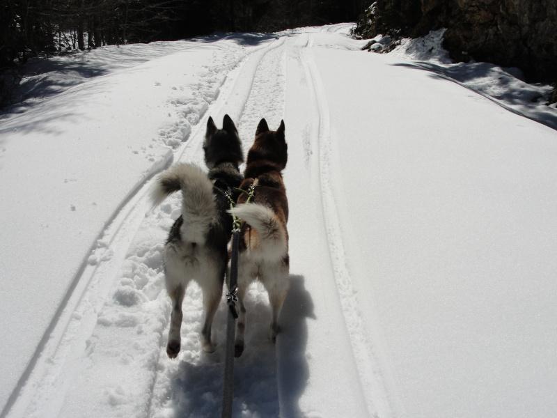 Loki et Gaïa Dsc02913