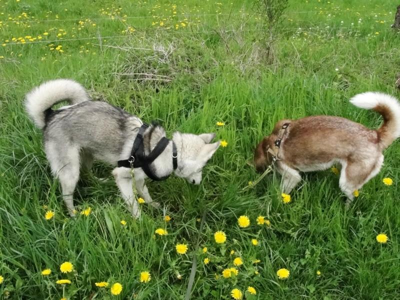 Loki et Gaïa Dsc02915