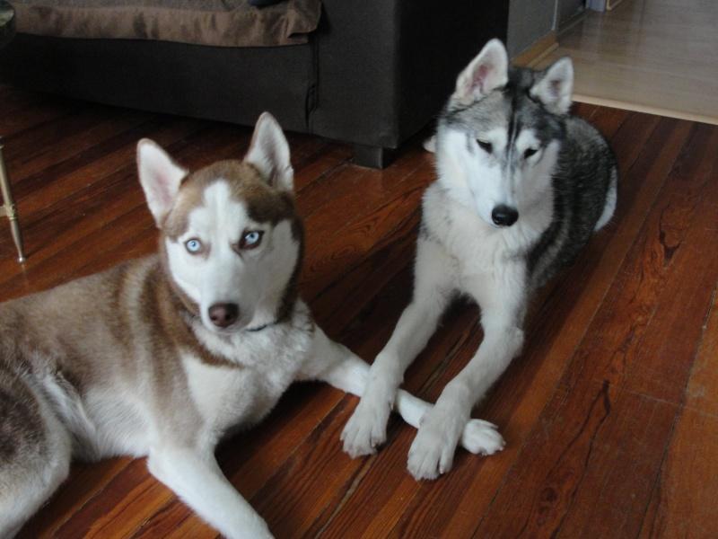 Loki et Gaïa Dsc02916