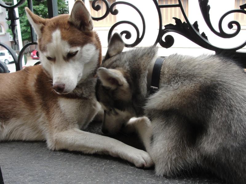 Loki et Gaïa Dsc02917