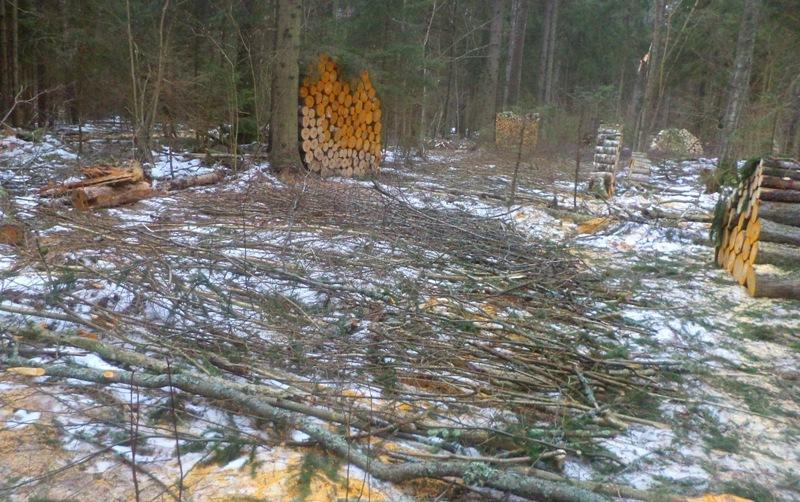 Национальный парк о заготовке дров для населения посёлка 113