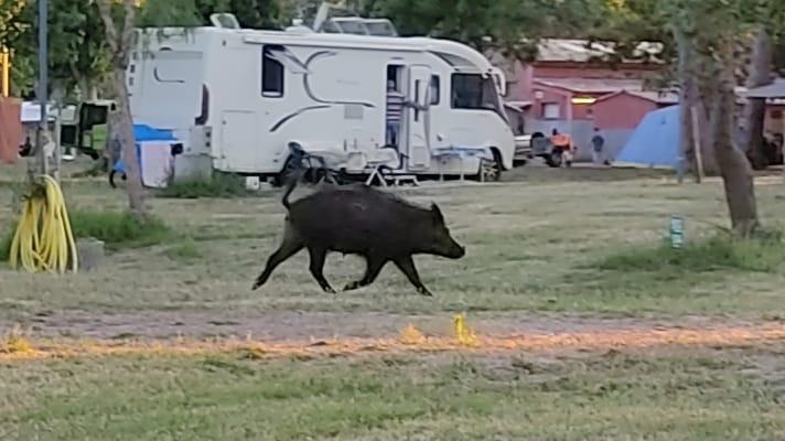 Un campeur  surprenant sur le terrain de camping Img-2015