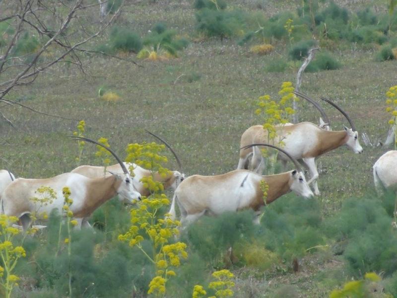 [Maroc Camp/Dernières nouvelles] Camping BAKANOU Dsc04714