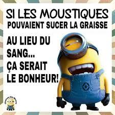 """Les """"Stupid Zèbres"""" c'est nous... - Page 5 Sucer_10"""