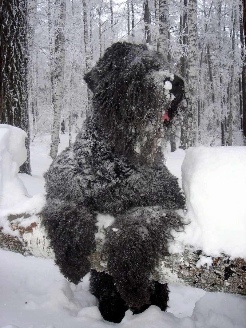 Эксклюзивчики - Общая ветка о Всех наших Собаках, ну и Нас, конечно, как Владельцев - Страница 3 37239510