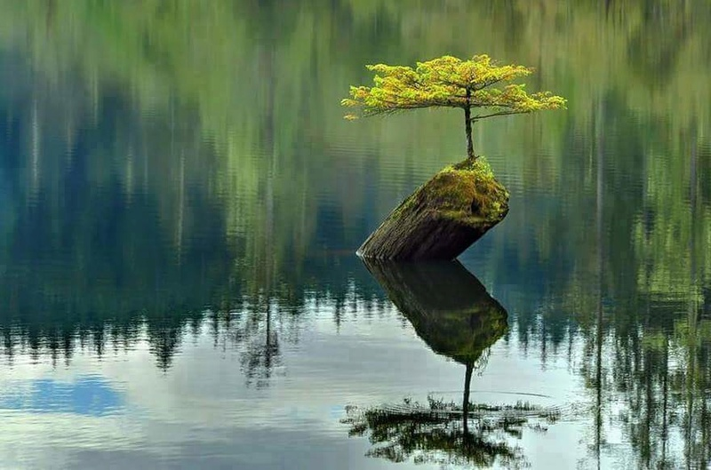 La natura all'opera Fb_img11