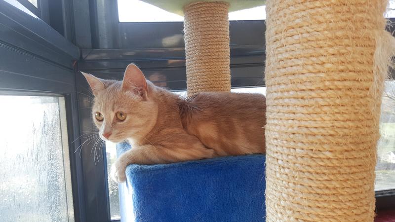Milo, européen tigré roux né le 1er Septembre 2016 - Page 6 0252b10