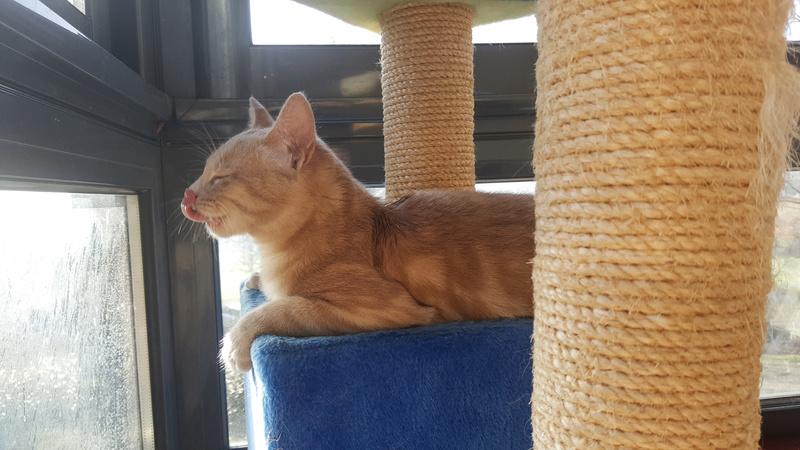 Milo, européen tigré roux né le 1er Septembre 2016 - Page 6 0254b10