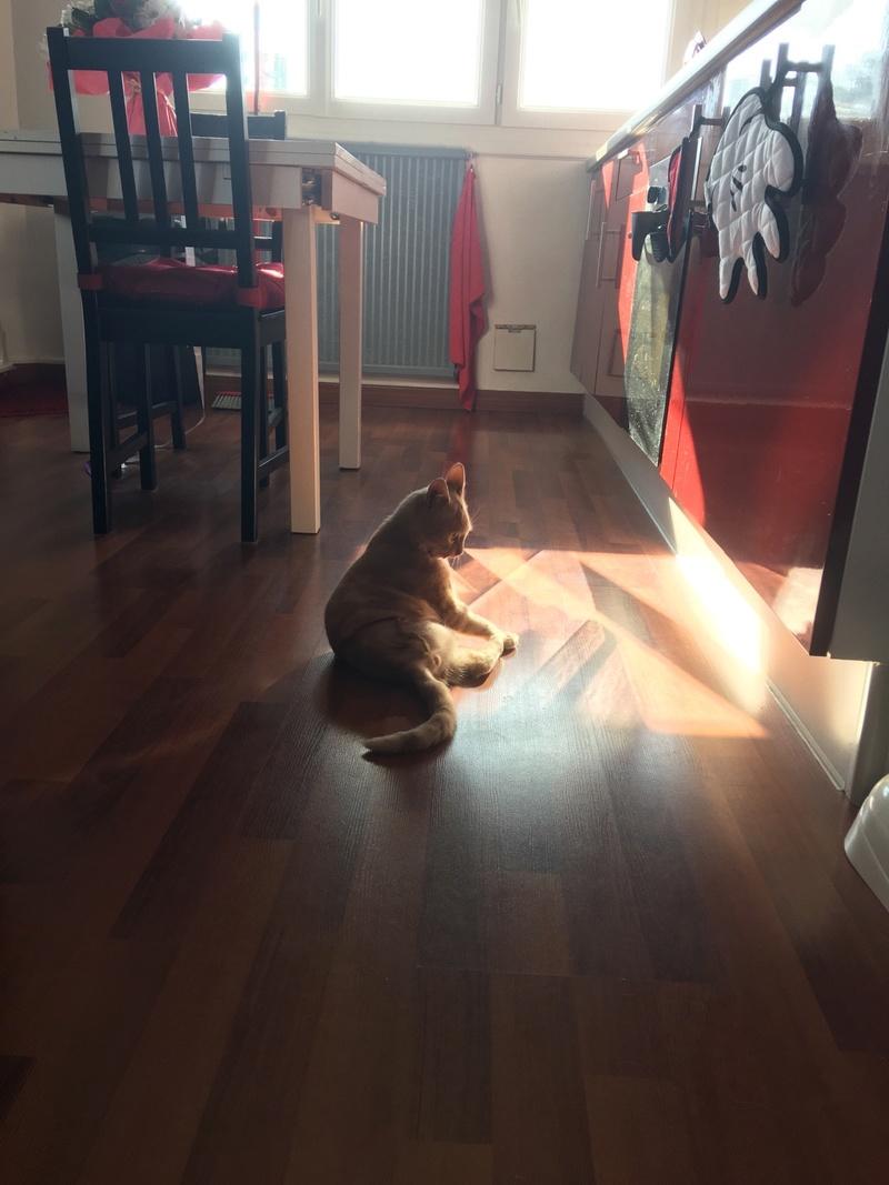 Milo, européen tigré roux né le 1er Septembre 2016 - Page 9 Img_0610
