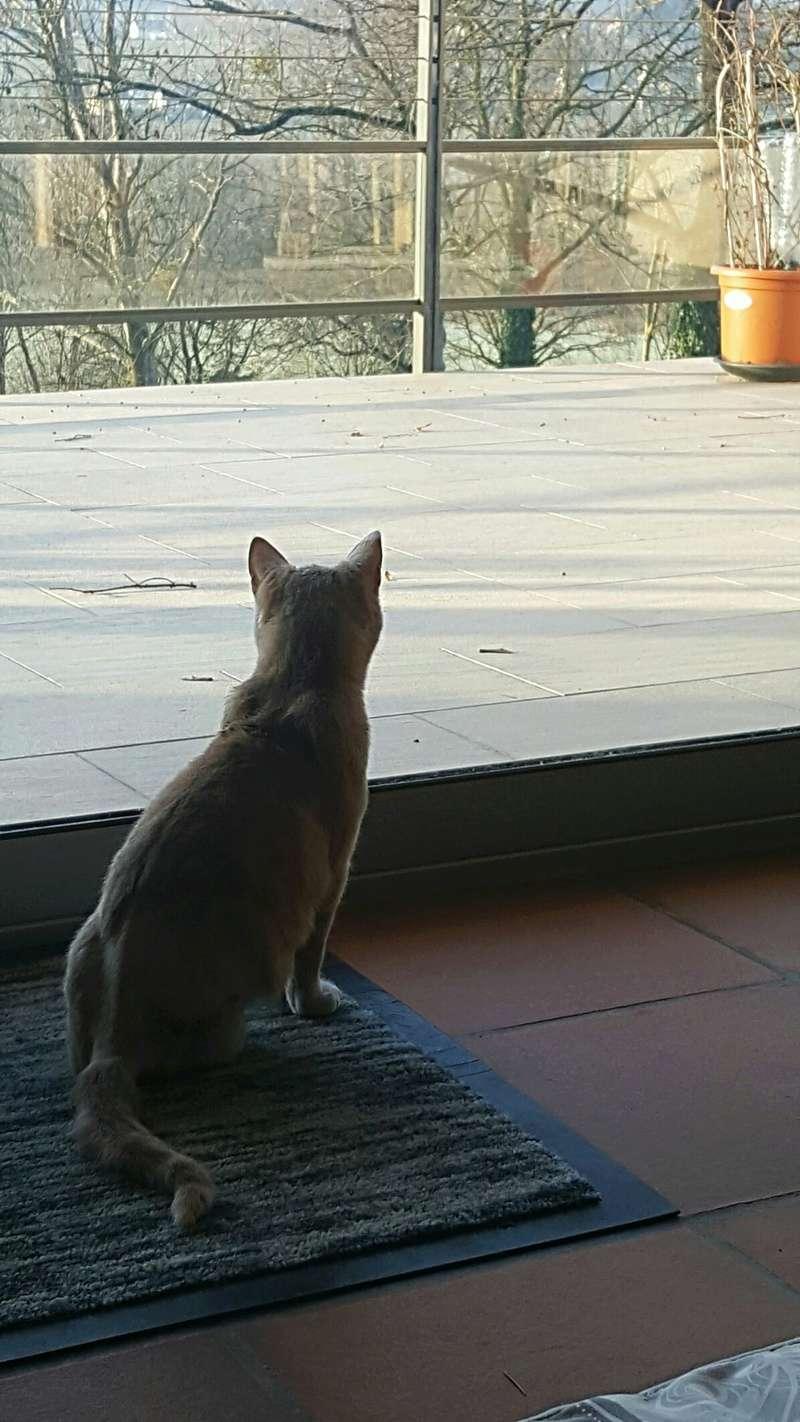 Milo, européen tigré roux né le 1er Septembre 2016 - Page 6 Img_2117