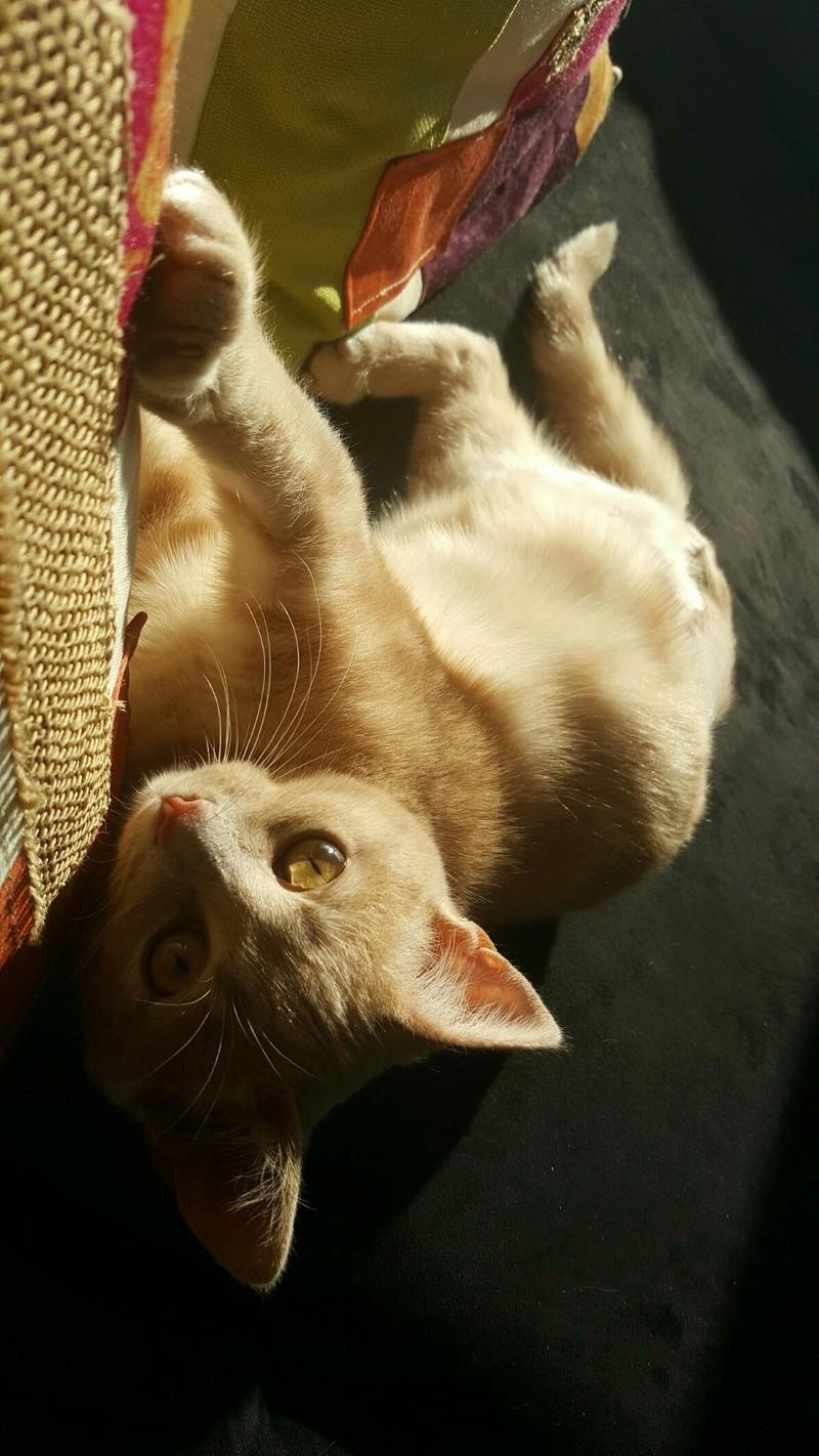 Milo, européen tigré roux né le 1er Septembre 2016 - Page 6 Img_2125
