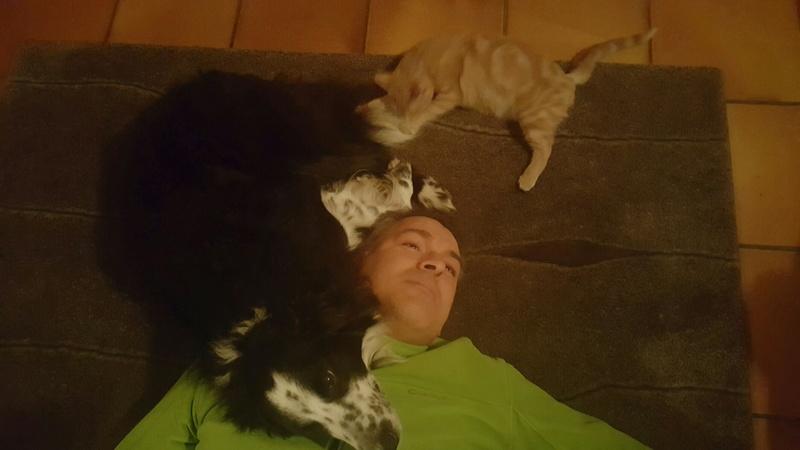 Milo, européen tigré roux né le 1er Septembre 2016 - Page 6 Img_2127