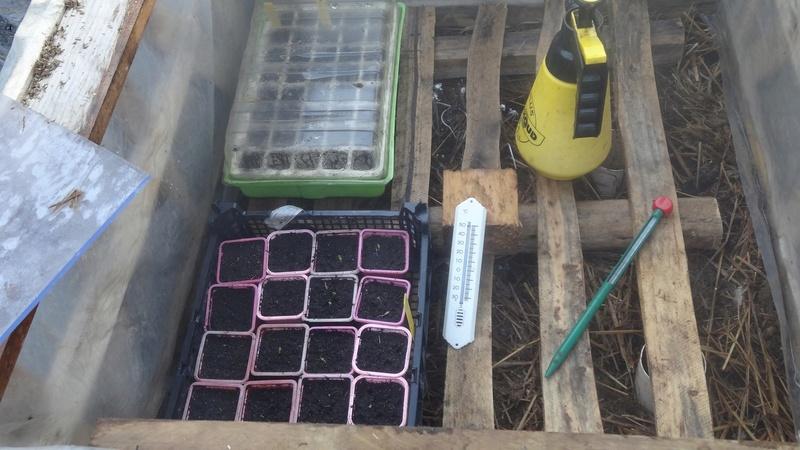 Les premiers semis sont faits 00410