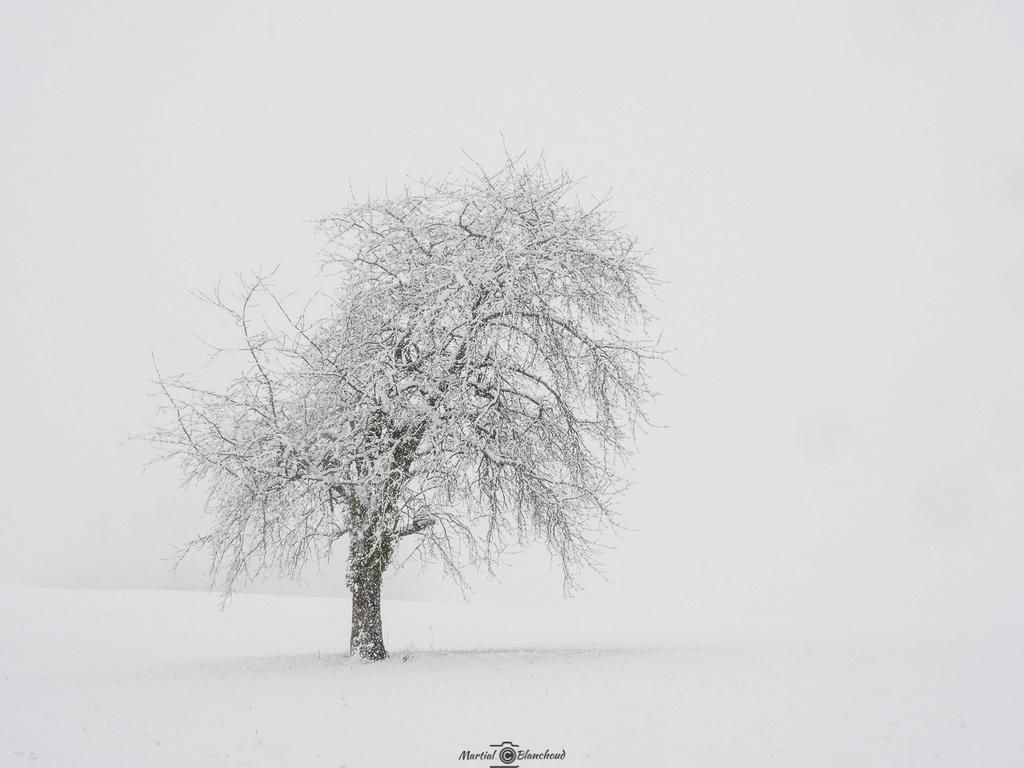 Sous la neige 1-web-10
