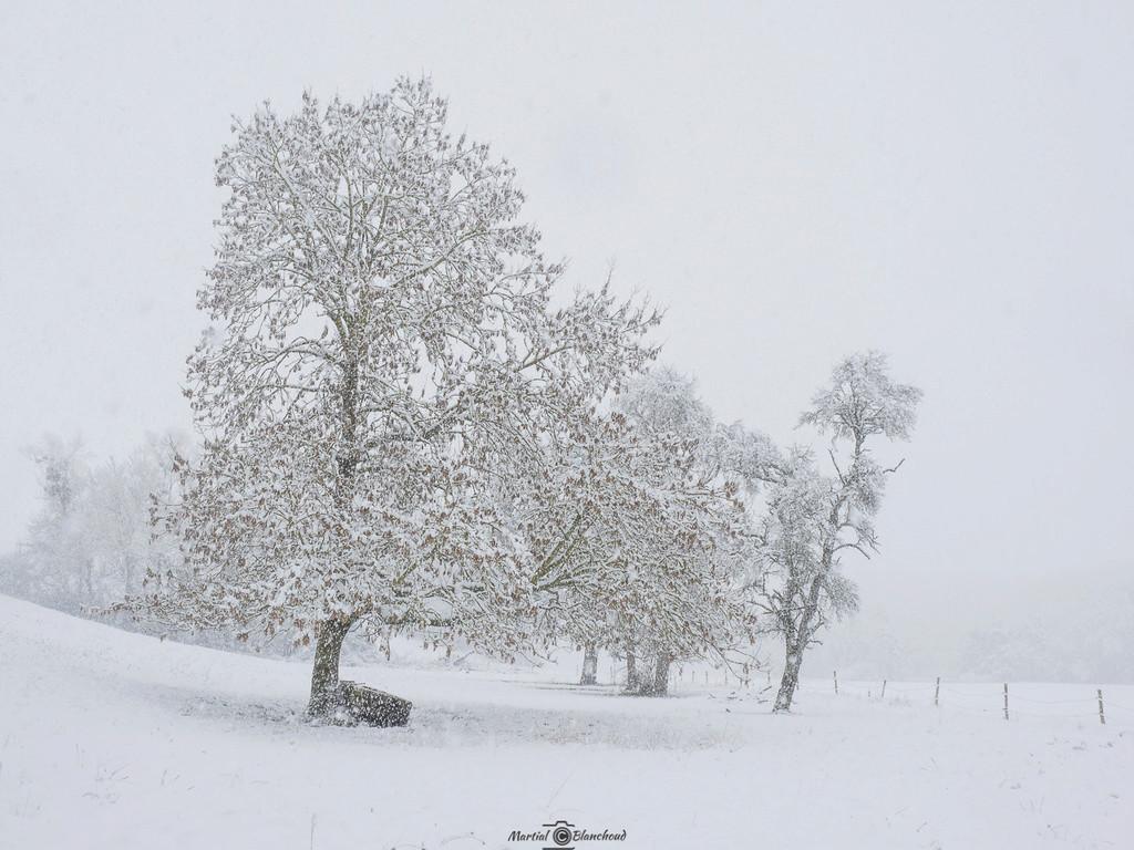 Sous la neige 1-web-11