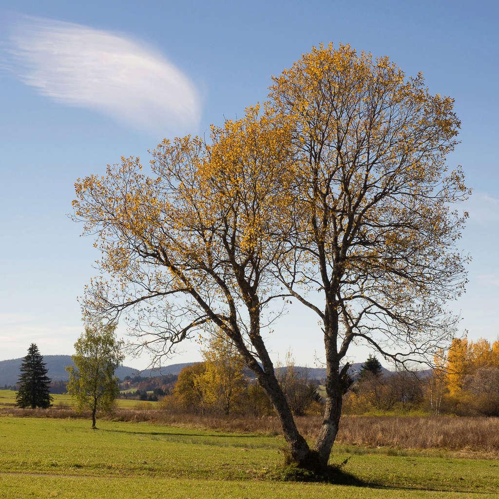 Couleurs d'automne 1-web-16