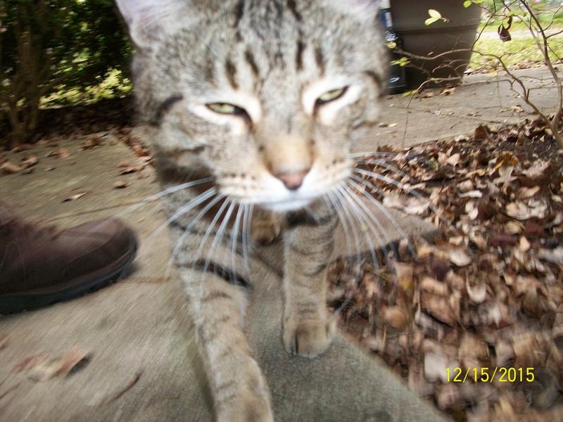 My cat 01810