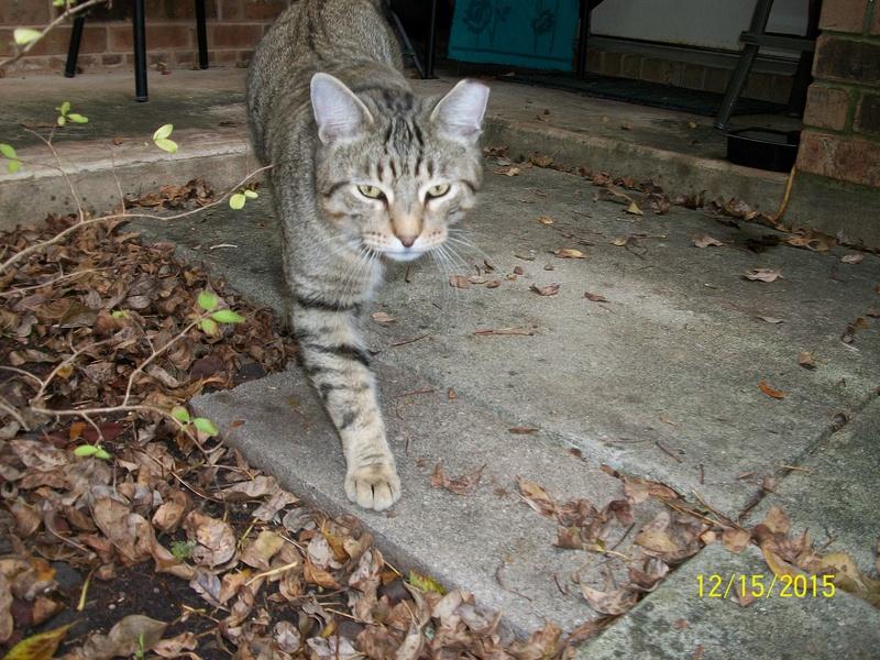 My cat 01910