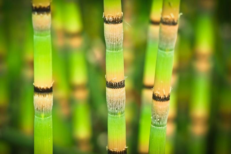 Bambou Bam1011