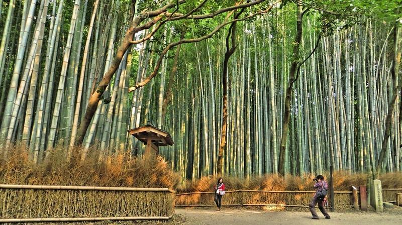 Bambou Bam2010