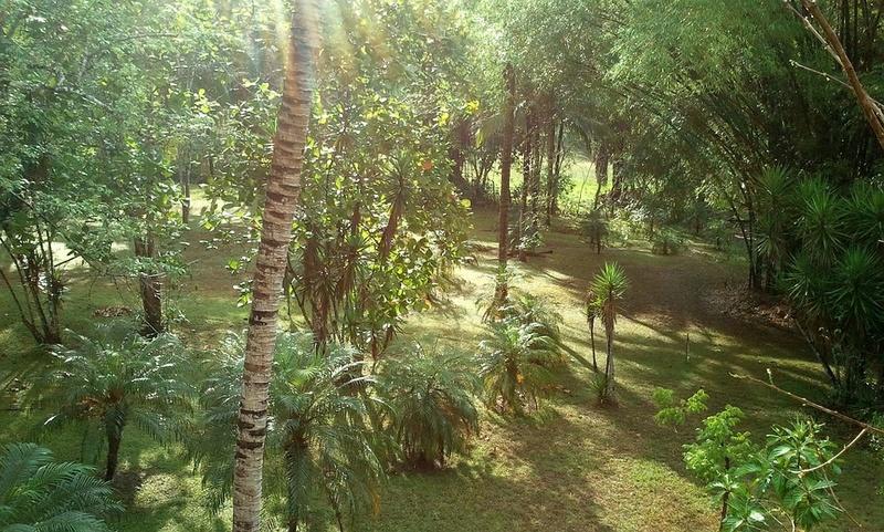 Bambou Bam2210