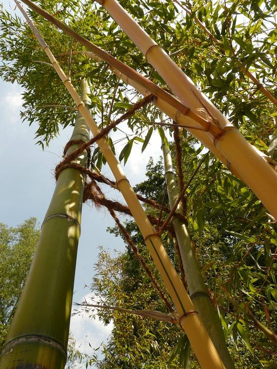 Bambou Bam2310