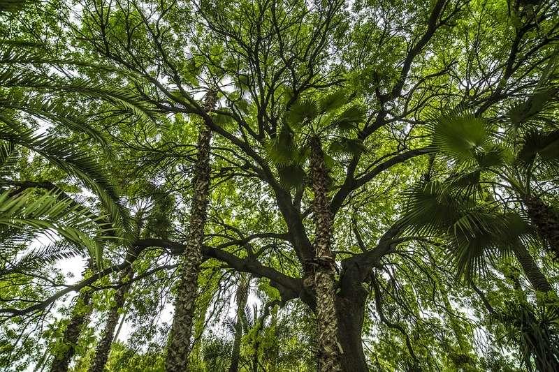 Bambou Bam2610