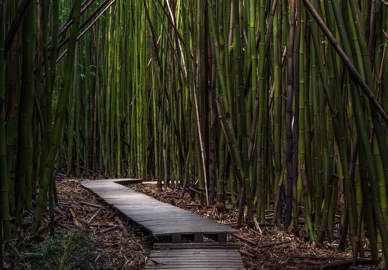 Bambou Bam310