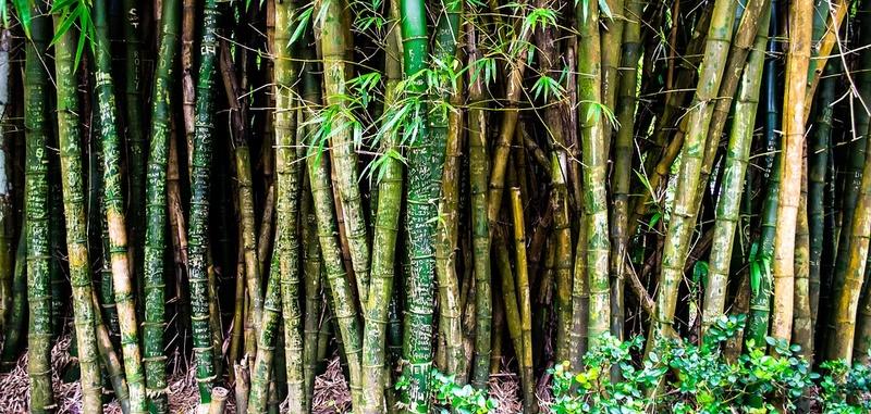 Bambou Bam410
