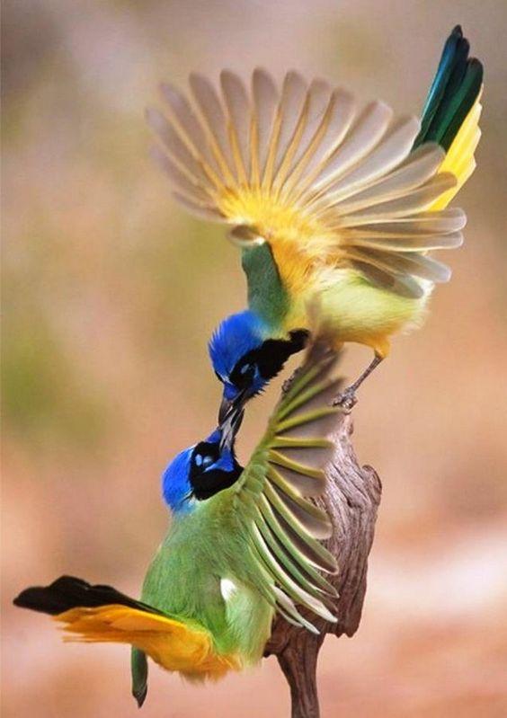 Les oiseaux  - Page 6 Ois2110