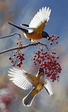 Les oiseaux  - Page 6 Ois2210