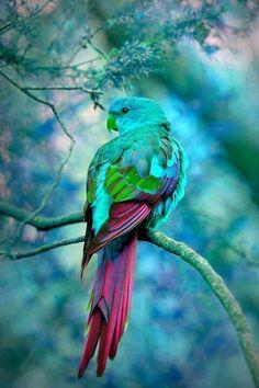 Les oiseaux  - Page 6 Ois4610