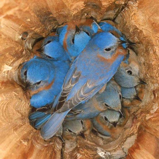 Les oiseaux  - Page 6 Ois5110