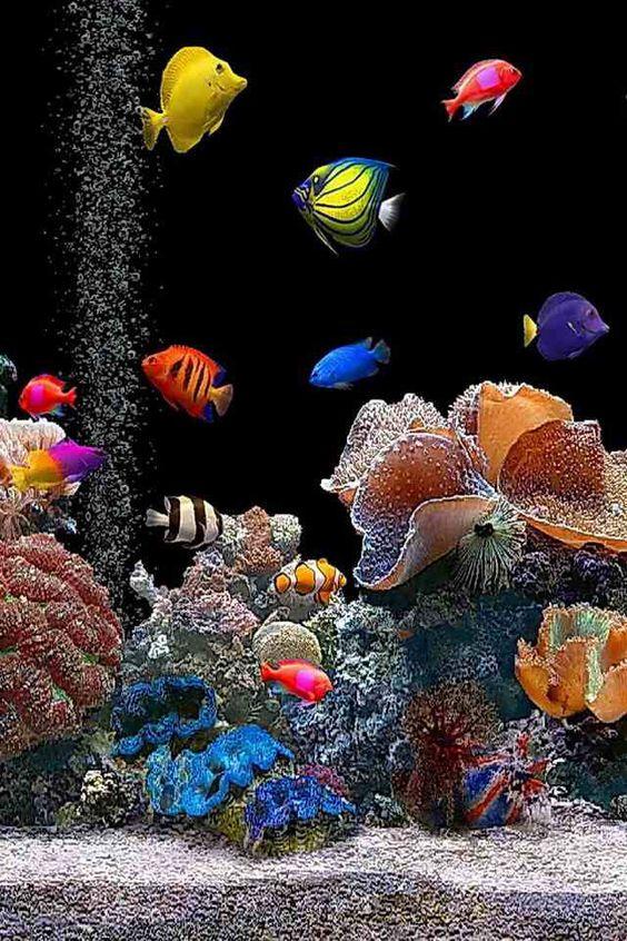 Les poissons en général - Page 3 Poi0210