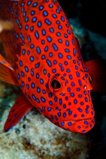 Les poissons en général - Page 3 Poi0410