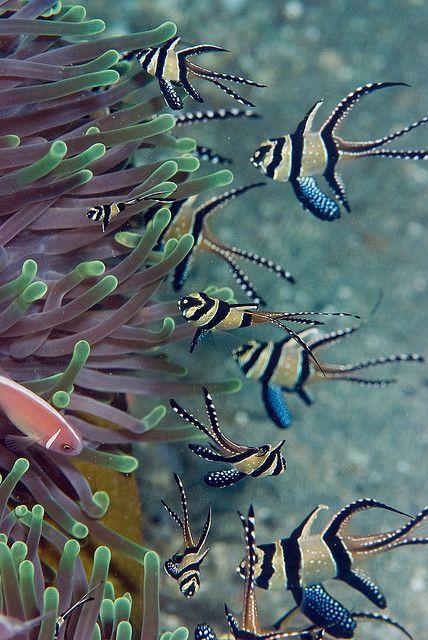 Les poissons en général - Page 3 Poi1610