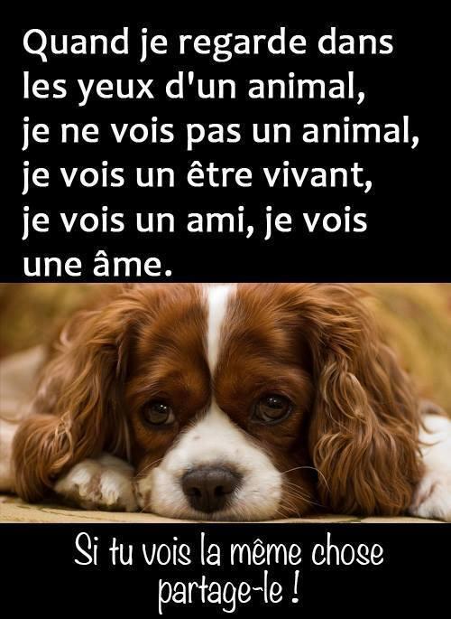 Chaîne de solidarité clic animaux - Page 6 10945511