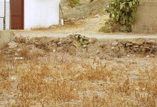 Seulement 12% des gens voient un renard sur cette photo Mon_ch10