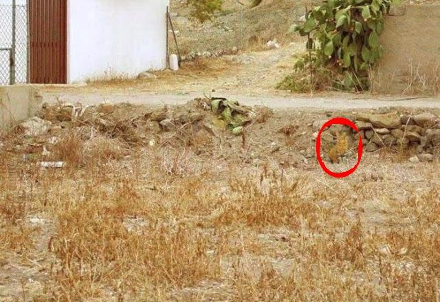 Seulement 12% des gens voient un renard sur cette photo Mon_ch11