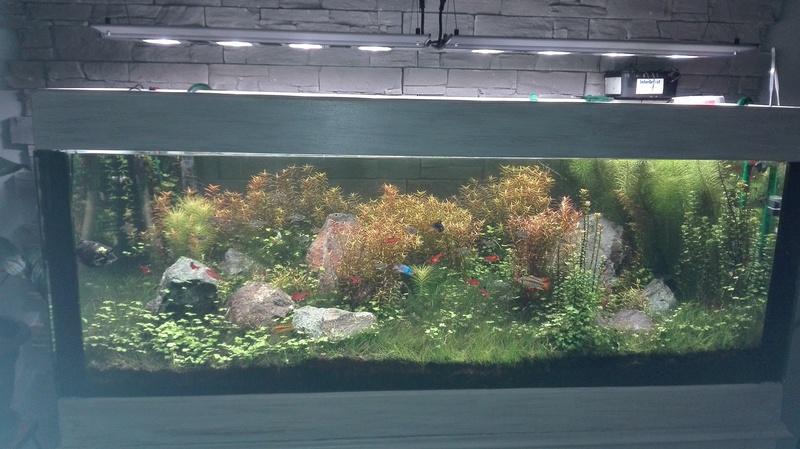 Rampe Led pour aquarium 150/60/50 H - Page 2 Img_2014