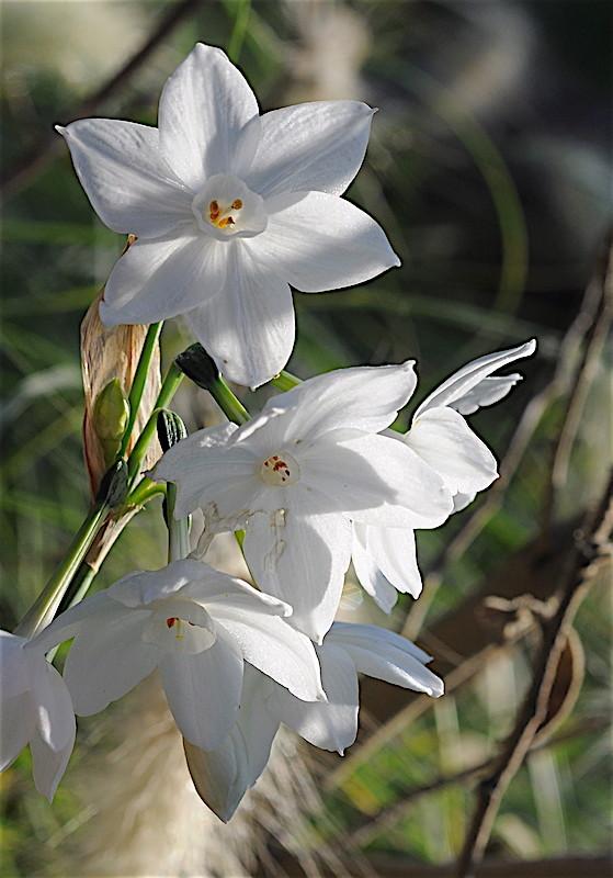 le jardin s'endort ... quoique Narcis10